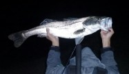 鯉 des garcons